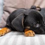 bijtgrage pup
