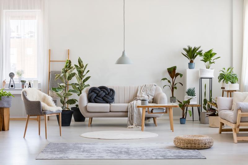 de-mooiste-kamerplanten-op-een-rijtje