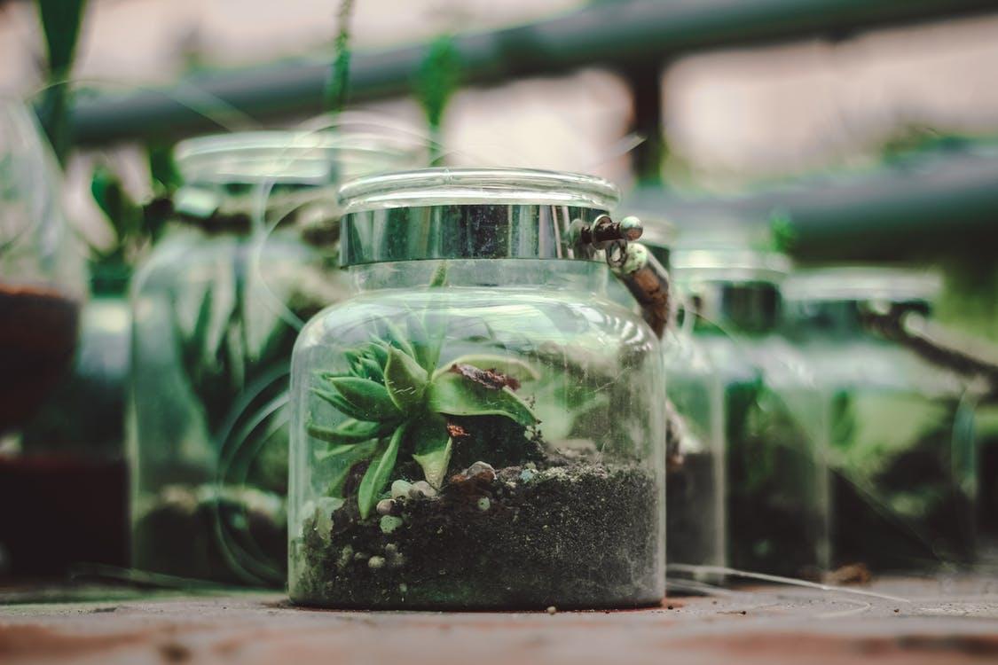 flesplanten