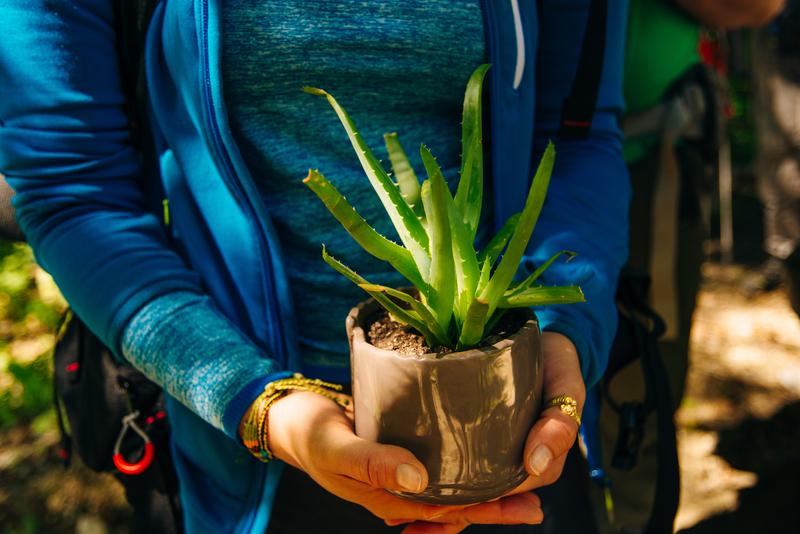 gezonde-planten-in-huis