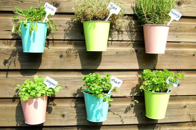 kalmerende-planten-in-huis