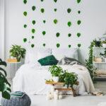 kamerplanten-die-weinig-zorg-nodig-hebben