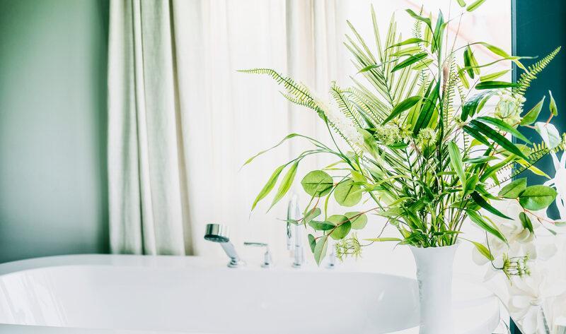 plant in vaas