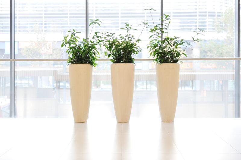 planten in vaas